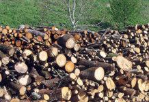 Vendita legna da ardere