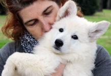 Il Pastore Svizzero Bianco: ideale per chi ama la vita in famiglia