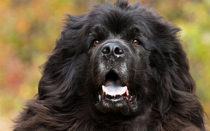 I 9 cibi da non dare mai al nostro cane